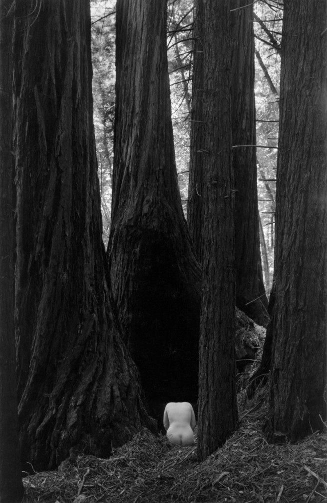 Wynn Bullock (American, 1902–1975) 'Nude Torso in Forest' 1958