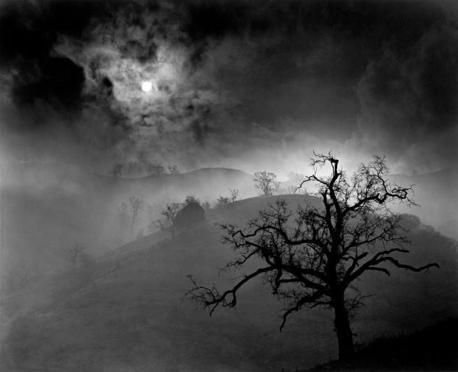 Wynn Bullock (American, 1902–1975) 'Stark Tree' 1956