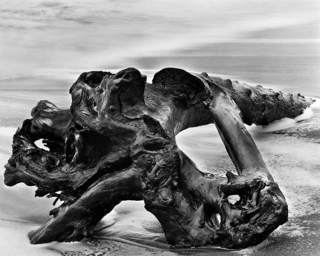 Wynn Bullock (American, 1902–1975) 'Driftwood' 1951