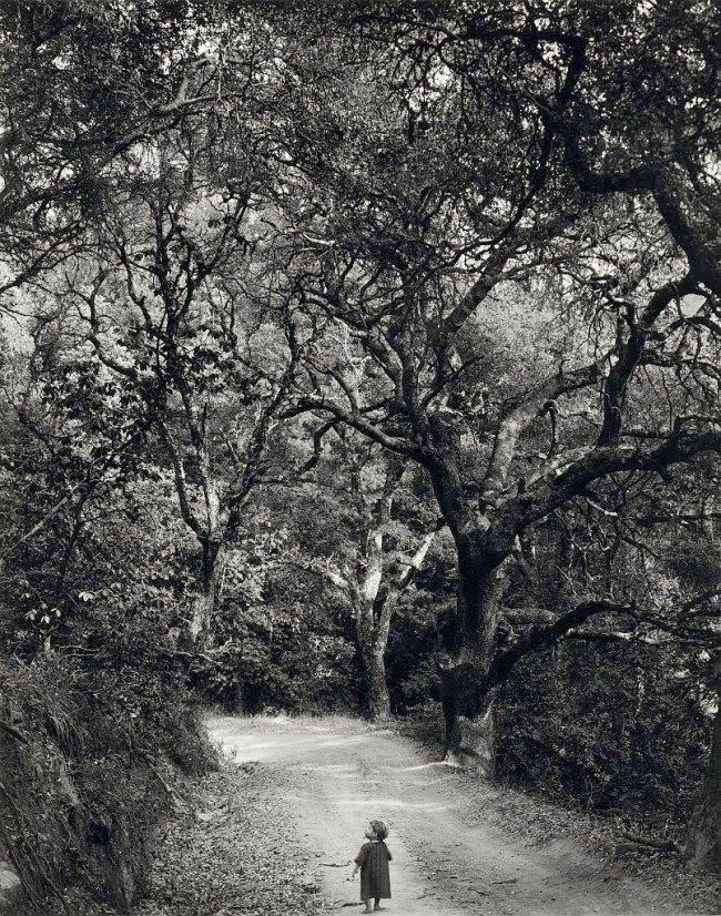 Wynn Bullock. 'Child on Forest Road' 1958