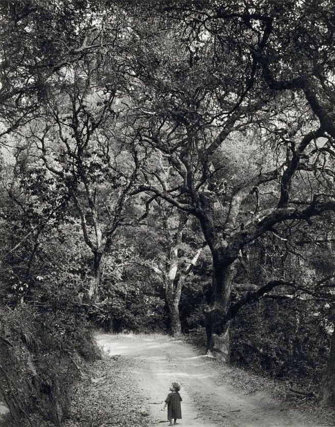 Wynn Bullock. 'Child on Forest Road' 1958