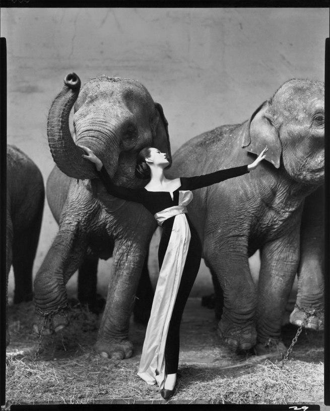 Richard Avedon. 'Dovima with elephants, evening dress by Dior, Cirque d'Hiver, Paris, August 1955' 1955