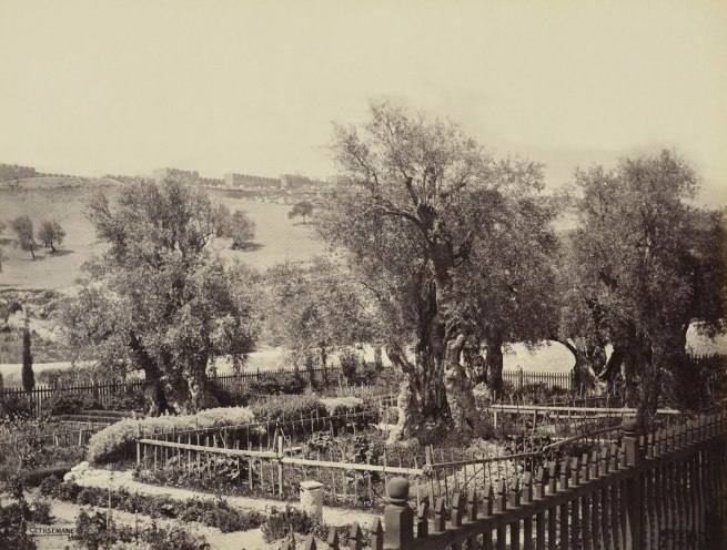 Francis Bedford (1815-94) (photographer) 'Garden of Gethsemane [Jerusalem]' 2 Apr 1862