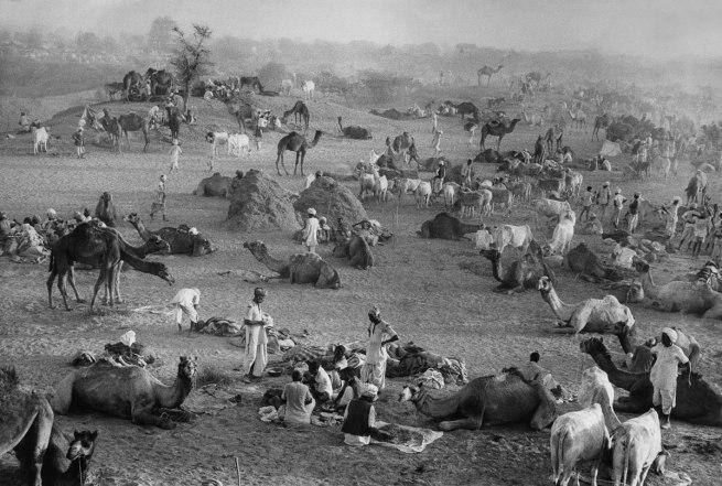 Marc Riboud (French, b. 1923) 'Camel Market' Nagaur, Rajasthan, India, 1956