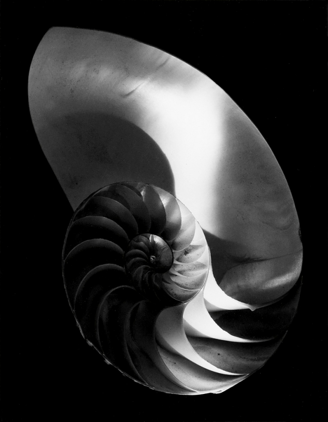 Paul Caponigro (1932- ) 'Nautilus Shell, Ipswich, Mass' 1960