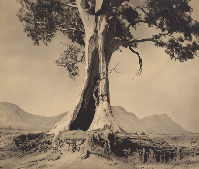 Harold Cazneaux. 'Spirit of endurance' 1937