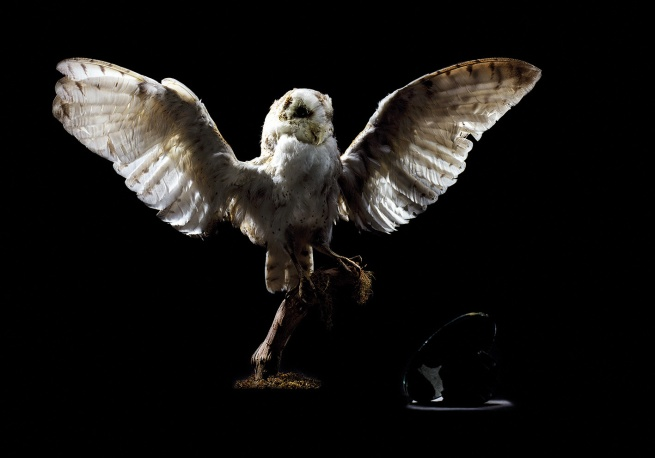 Brook Andrew. 'Replicant series: Owl' 2005