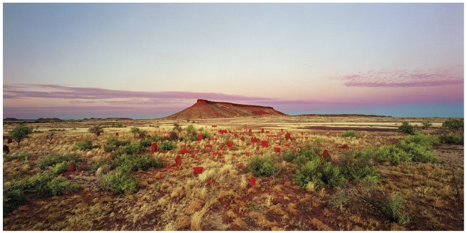 Rosemary Laing. 'Brumby mound #5' from the series 'One dozen unnatural disasters in the landscape' 2003