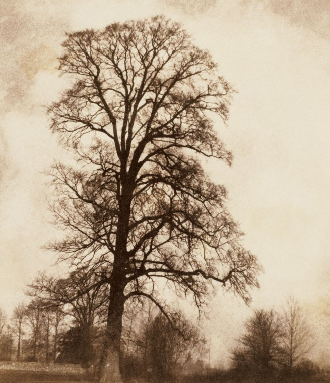 William Fox Talbot. 'The Great Elm at Lacock' 1843-45
