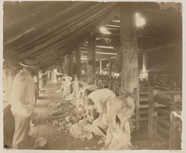 Charles Nettleton. 'Seven Creeks Station near Longwood. Shearing' c. 1880