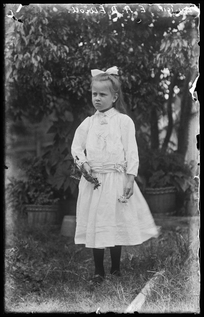 Alfred Elliott. 'Dorothy Elliott' 1911