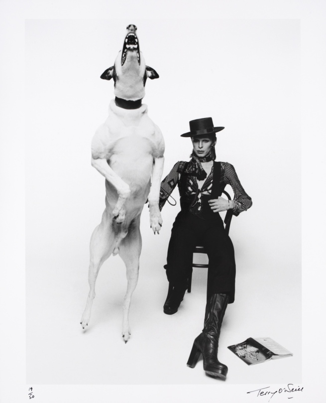Terry O'Neill. 'Promotional photograph of David Bowie for 'Diamond Dogs'' 1974