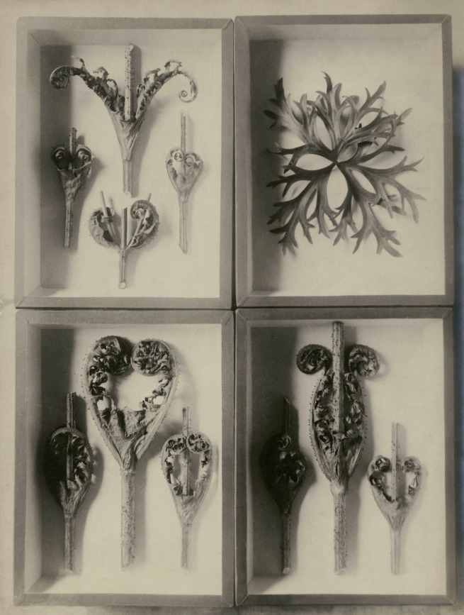 Karl Blossfeldt. 'Four Herbariums with groomed Thistels and Delphinium' undated
