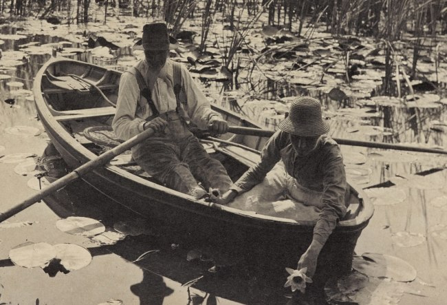 Peter Henry Emerson. 'Gathering Water Lilies' 1886 (detail)