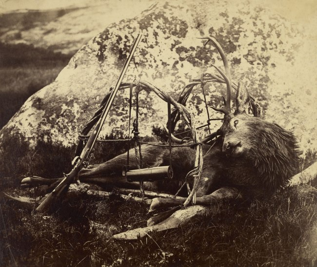 Capt. Horatio Ross (British, 1801-1886) '[Dead stag in a sling]' c. 1850s - 1860s