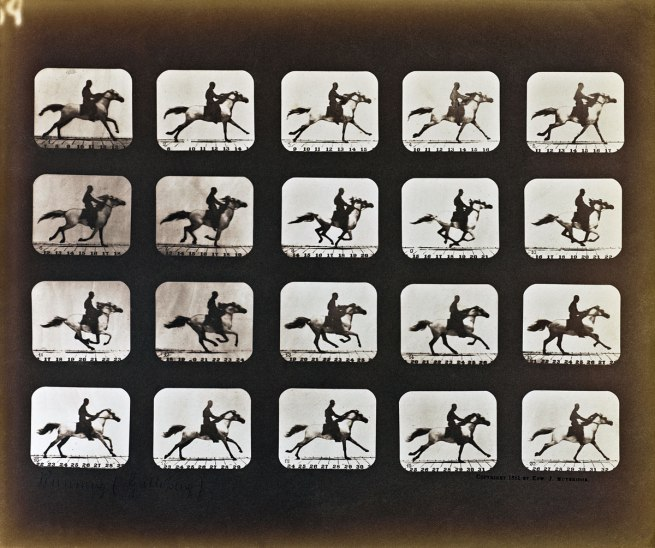 Eadweard J. Muybridge (American, born England, 1830-1904) 'Running (Galloping)' 1878 - 1881