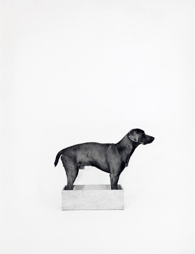 William Wegman (American, born 1943) 'In the Box/Out of the Box [left]' 1971