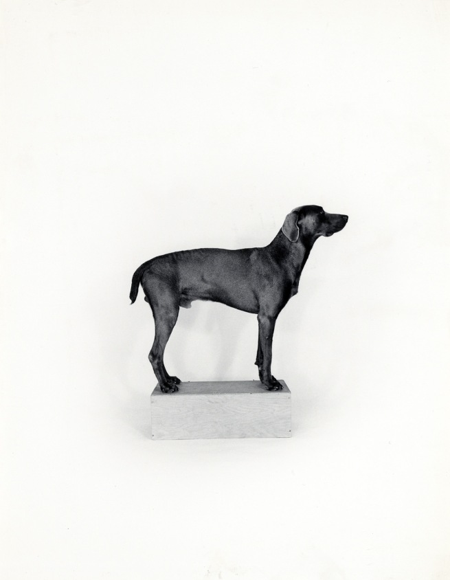 William Wegman (American, born 1943) 'In the Box/Out of the Box [right]' 1971