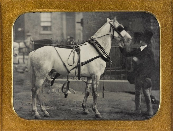Taken by a photographer of the London School of Photography, based at Newgate Street and Regent Circus, London. 'Portrait of a horse held by a groom' 1858-60