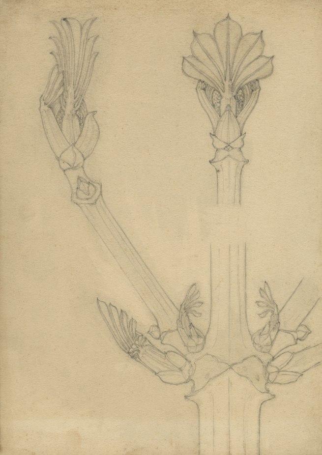 Karl Blossfeldt. 'Nature study (chestnut)' 1890s