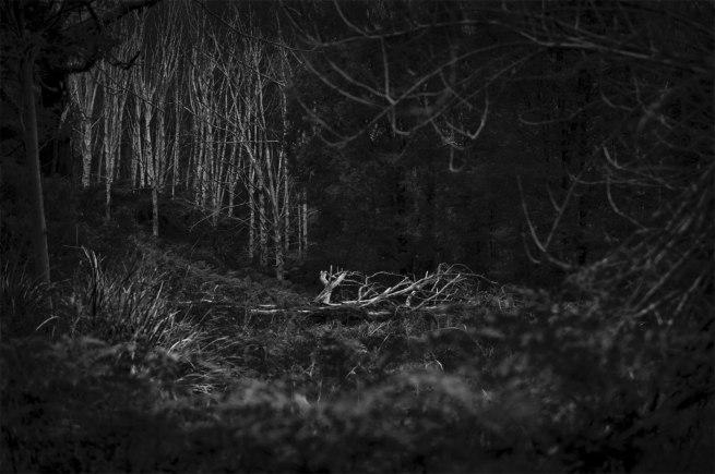 David Bibby. 'Untitled #1' 2014