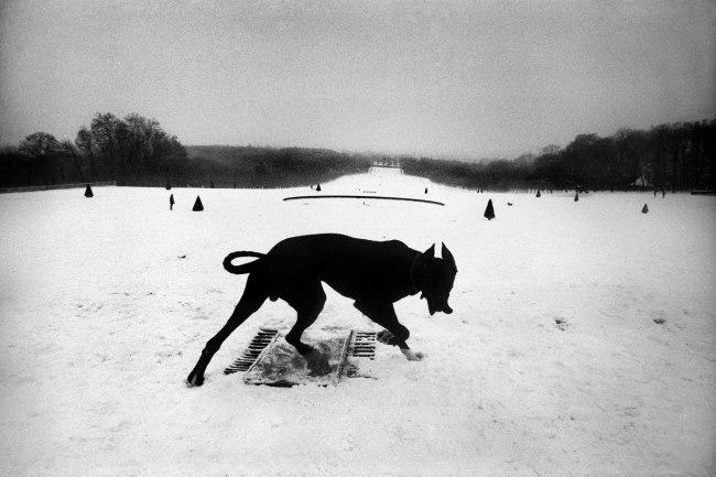 Josef Koudelka. 'Parc de Sceaux, Hauts-de-Seine, France' 1987