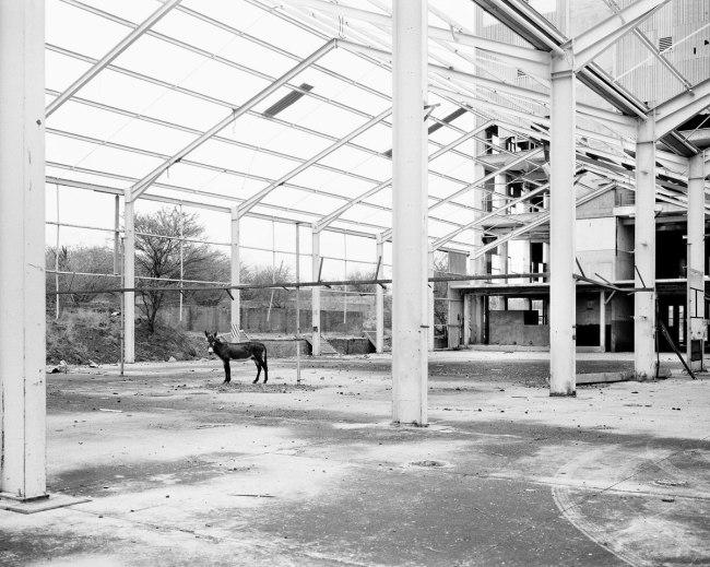 Jo Ractliffe (South African, born 1961) 'Donkey, Pomfret Asbestos Mine' 2011