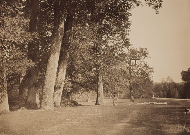 Gustave Le Gray (French, 1820-1884) 'Trees along the Pavé de Chailly' 1852