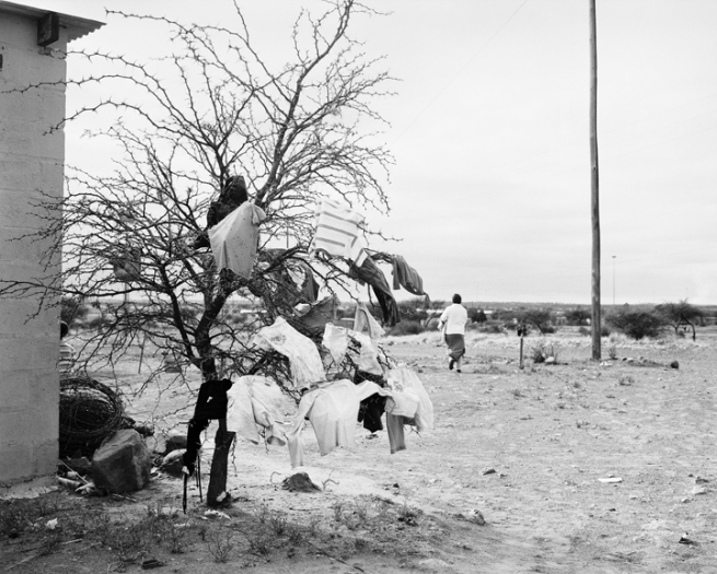 Jo Ractliffe (South African, born 1961) 'Thorn tree, Platfontein' 2012