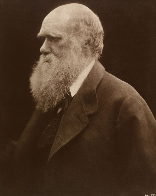 Julia Margaret Cameron. 'Charles Darwin' 1868, printed 1875