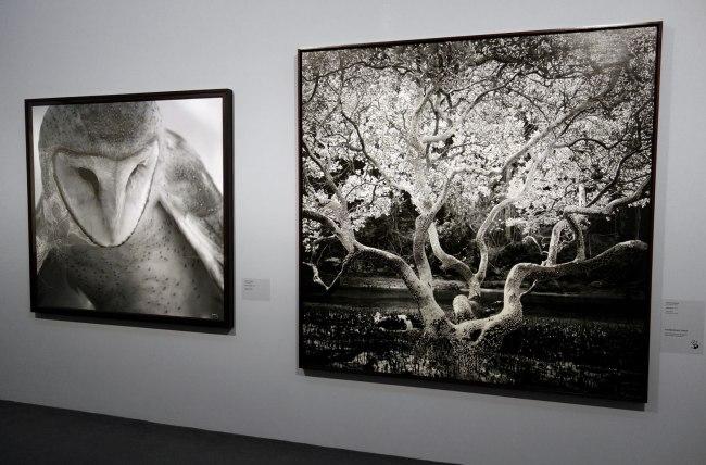 Installation view of the work of Joshua YELDHAM