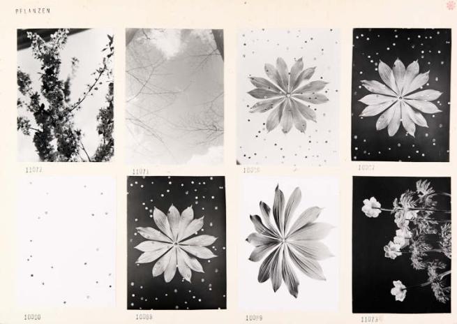 Werner Bischof (1916 - 1954) 'Plants' Zürich c. 1941