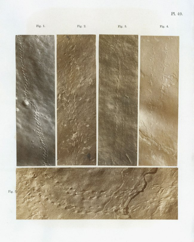 Dr James Deane (American, 1801-1858) 'Ichnographs from the Sandstone of Connecticut River' 1861