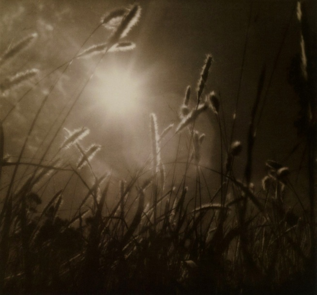 Max Dupain (Australian, 1911 - 1992) 'Grass at sundown' 1939