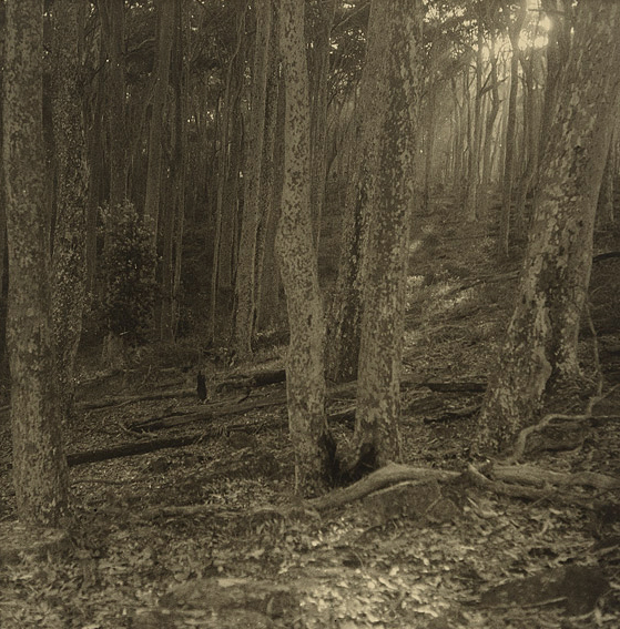 Olive Cotton (Australian, 1911 - 2003) 'The way through the trees' 1938