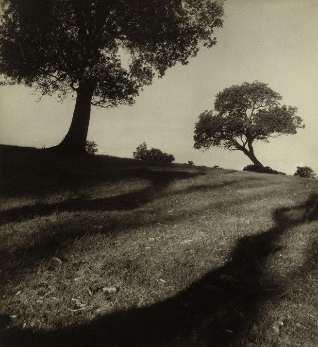 Max Dupain (Australian, 1911 - 1992) 'Bawley Point landscape' 1938