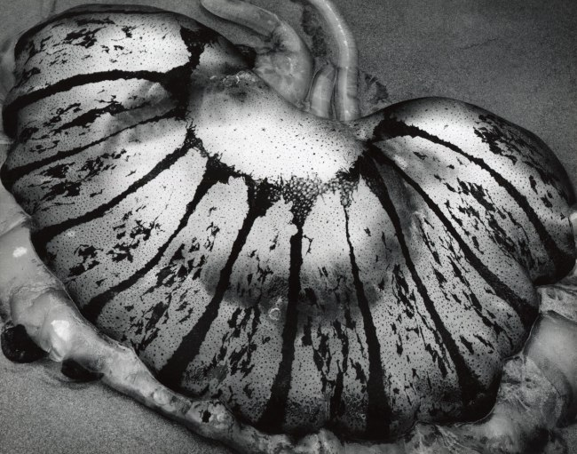 Brett Weston. 'Jellyfish, California' 1967