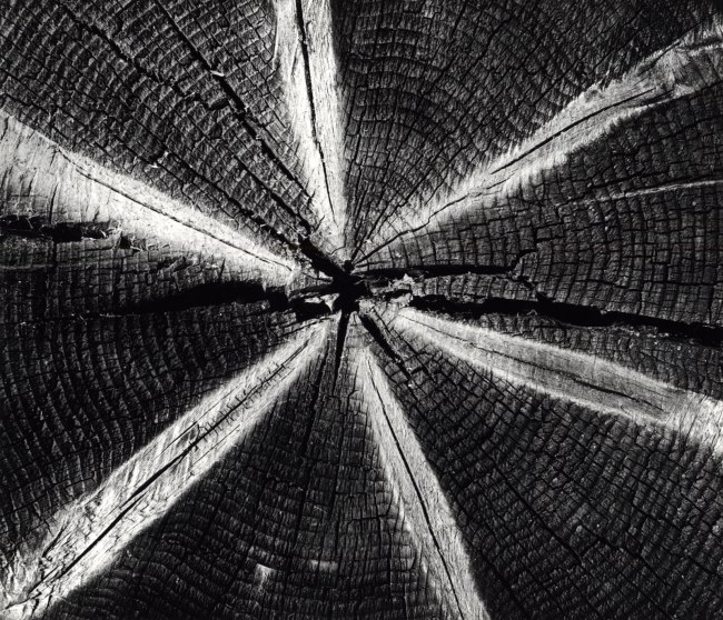 Brett Weston. 'Wood' 1972