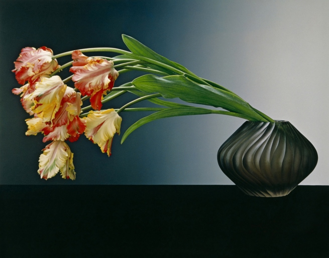 Robert Mapplethorpe (American, 1946-1989) 'Parrot Tulips' 1988