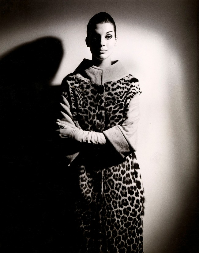Henry Talbot (Germany 1920 - Australia 1999, Australia from 1940) 'No title (Fashion illustration, model Maggie Tabberer wearing ocelot coat)' 1961-66