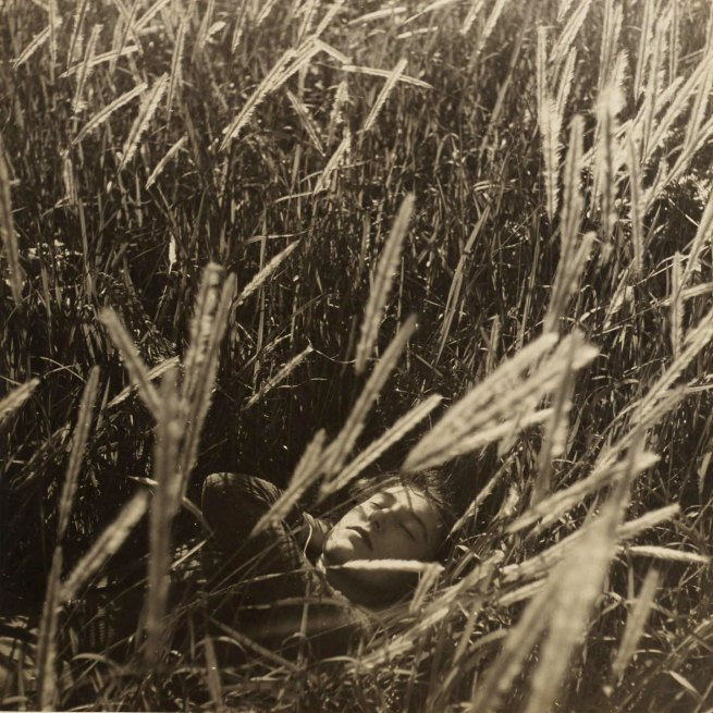 Max Dupain (Australian, 1911 - 1992) 'Untitled [Olive Cotton in Wheat Fields]' Nd (probably late 1930s)