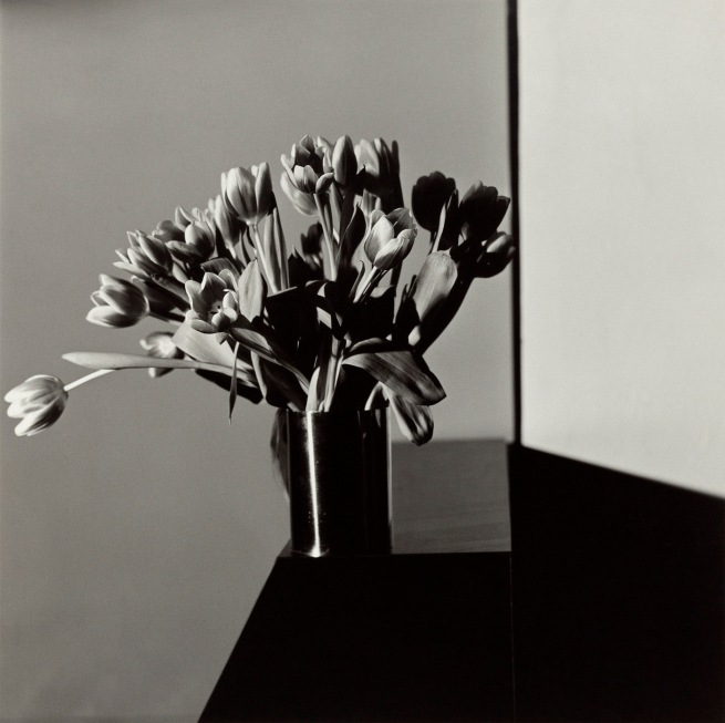 Robert Mapplethorpe (American, 1946-1989) 'Tulips' 1978