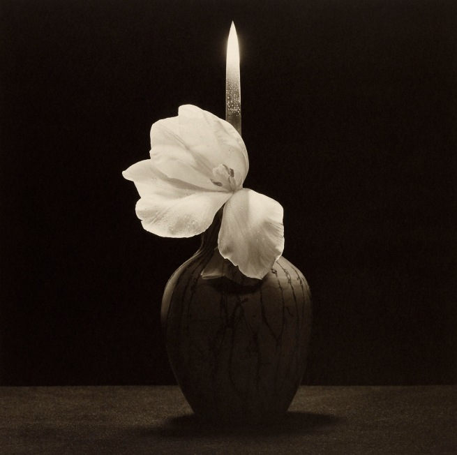 Robert Mapplethorpe (American, 1946-1989) 'Flower With Knife' 1985