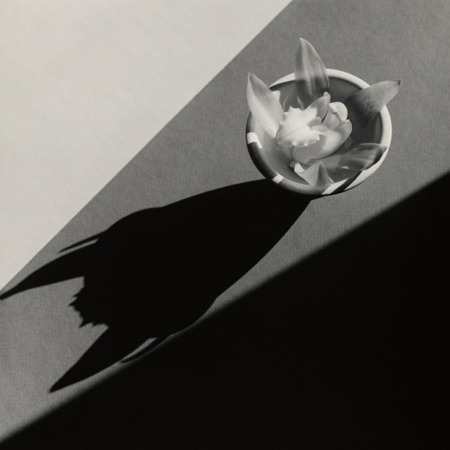 Robert Mapplethorpe (American, 1946-1989) 'Orchid' 1987