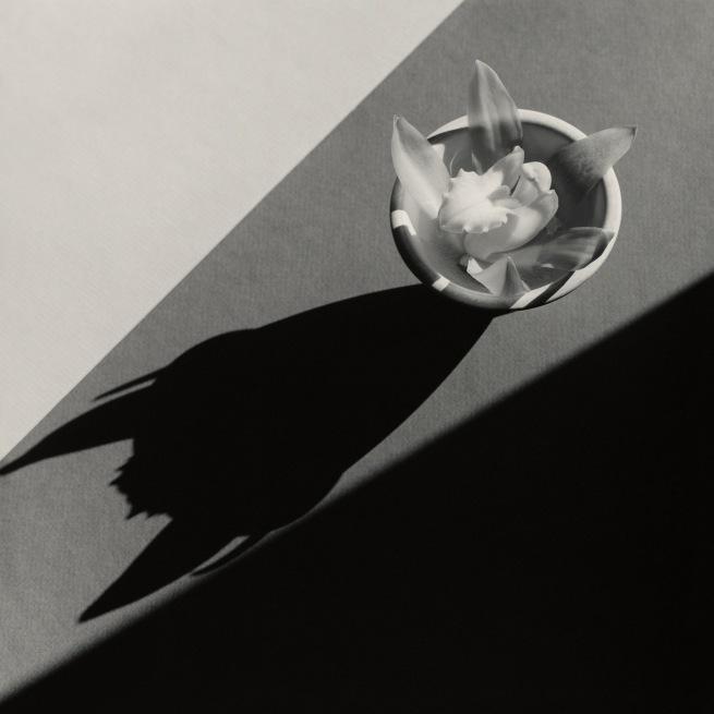 Robert Mapplethorpe (American, 1946-1989) 'Orchid' 1987