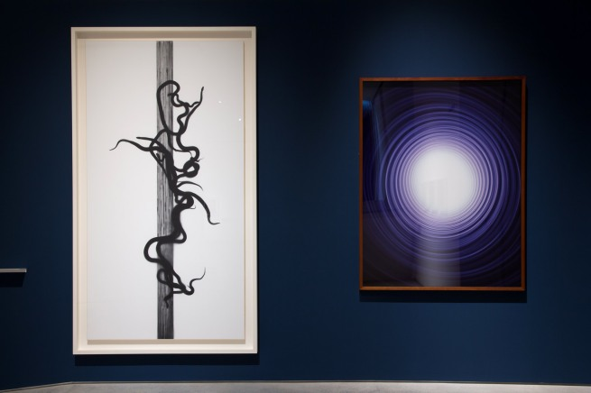 installation view of Adam Fuss (UK/Australia/US) 'Caduceus' 2010 (left) and 'Untitled' 1991 (right)