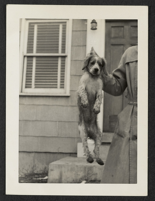 Unknown maker (American) 'Dog being held by neck' c. 1940