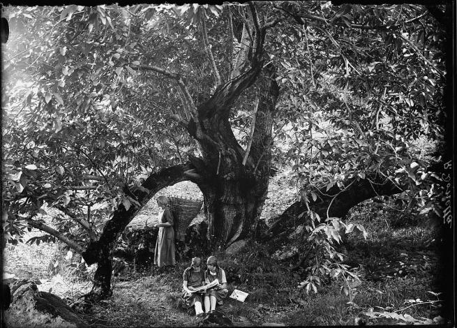 Roberto Donetta. 'Three girls in the break from work in the fields under a tree' 1900-1932