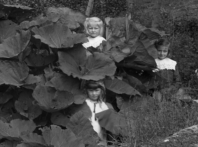 Roberto Donetta. 'Four Children in Leafs, Bleniotal' (detail) Nd