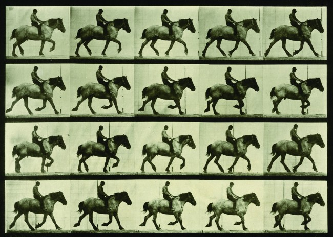 Eadweard Muybridge. 'Animal Locomotion, Plate 597' 1887